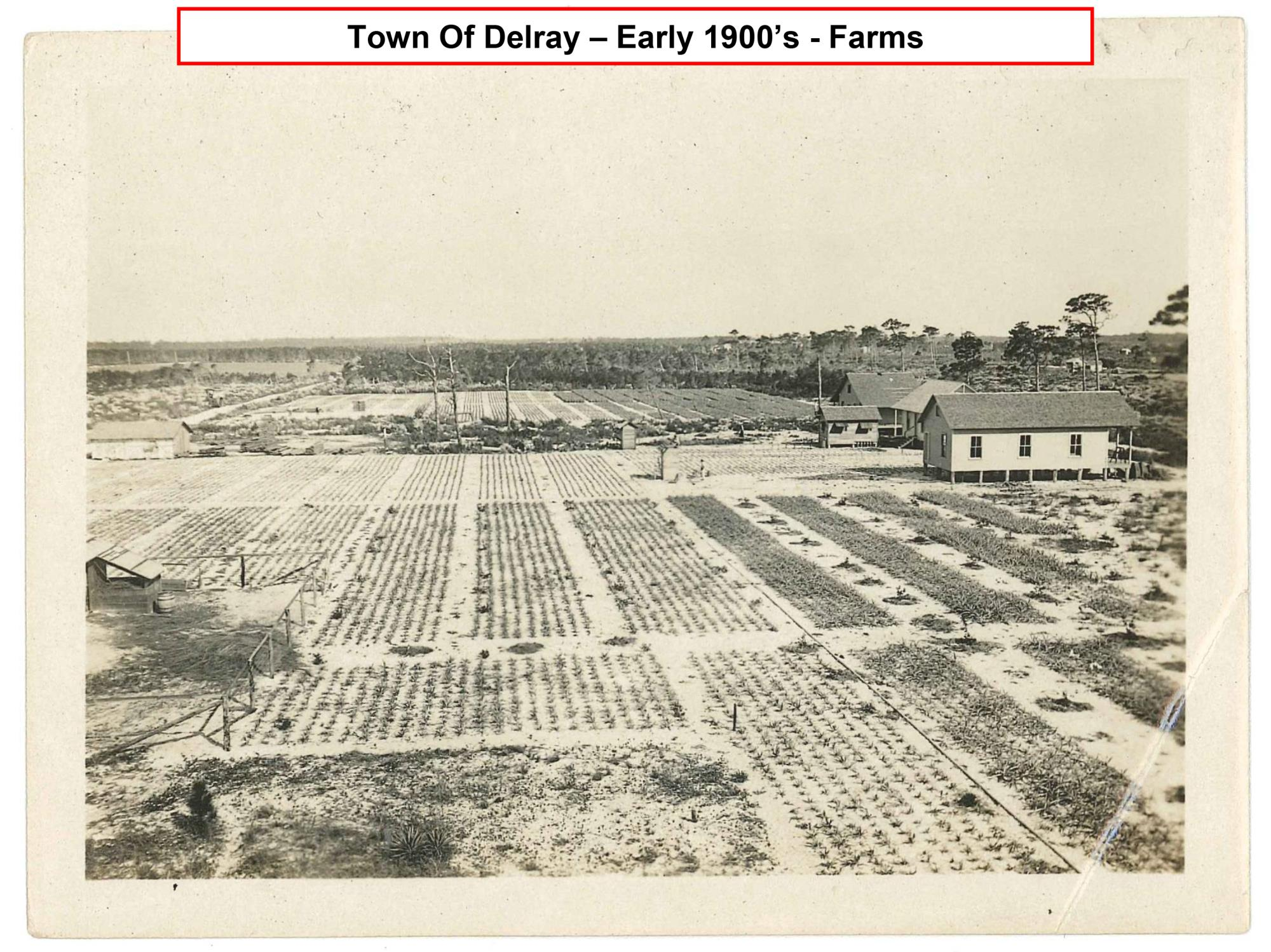 Town of Delray early 1900's farms